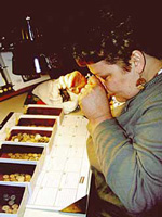 [photo: coin grader at work]